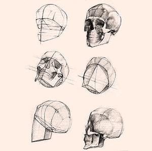Ich liebe Anatomie